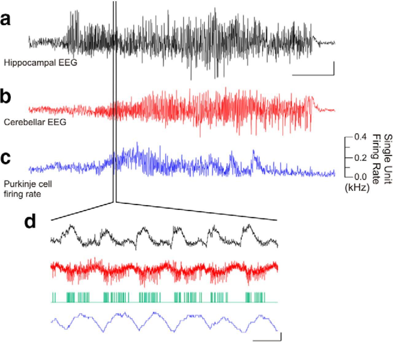 cerebellar directed optogenetic intervention inhibits
