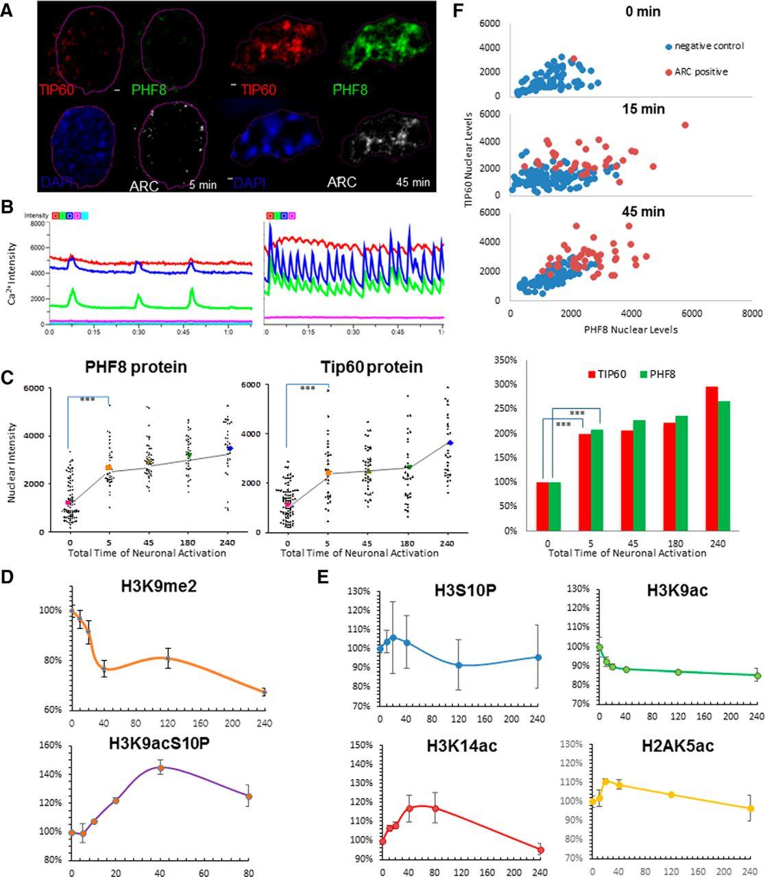 A Neuronal Activity-Dependent Dual Function Chromatin