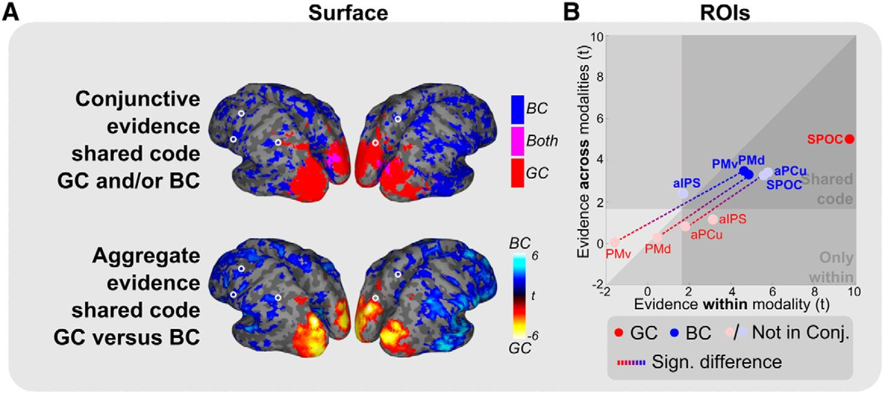 Flexible Reference Frames for Grasp Planning in Human Parietofrontal