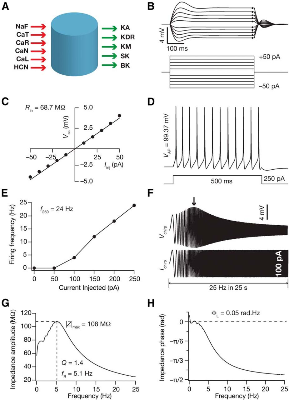 Variability in State-Dependent Plasticity of Intrinsic