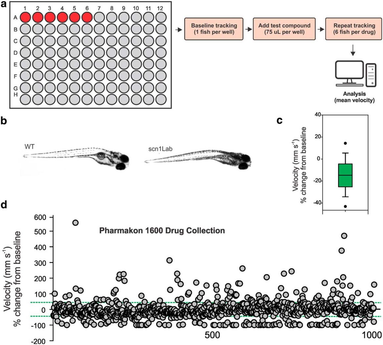 Large scale phenotype based antiepileptic drug screening for Can fish have seizures