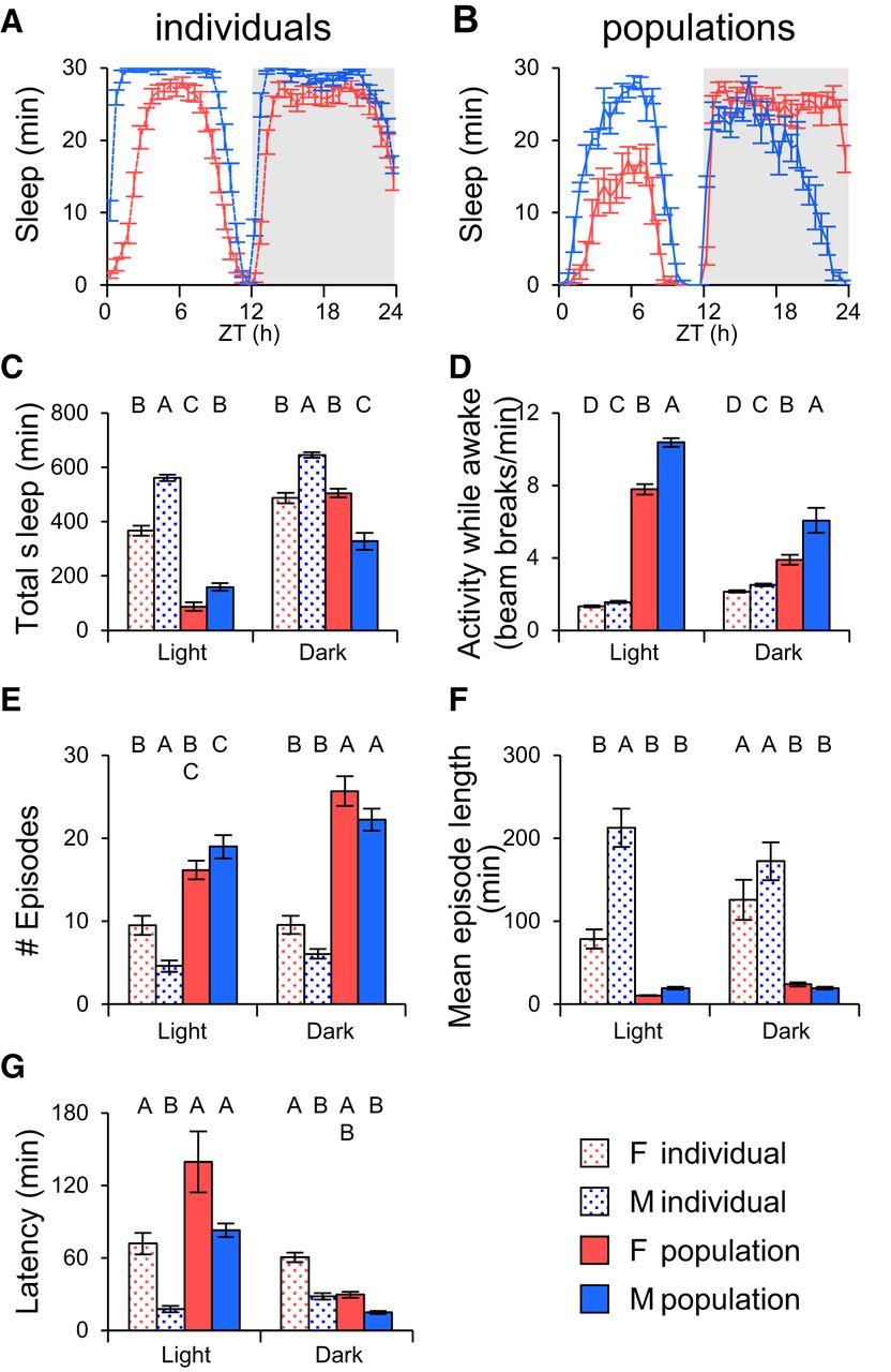 Sleep in Populations of Drosophila Melanogaster | eNeuro
