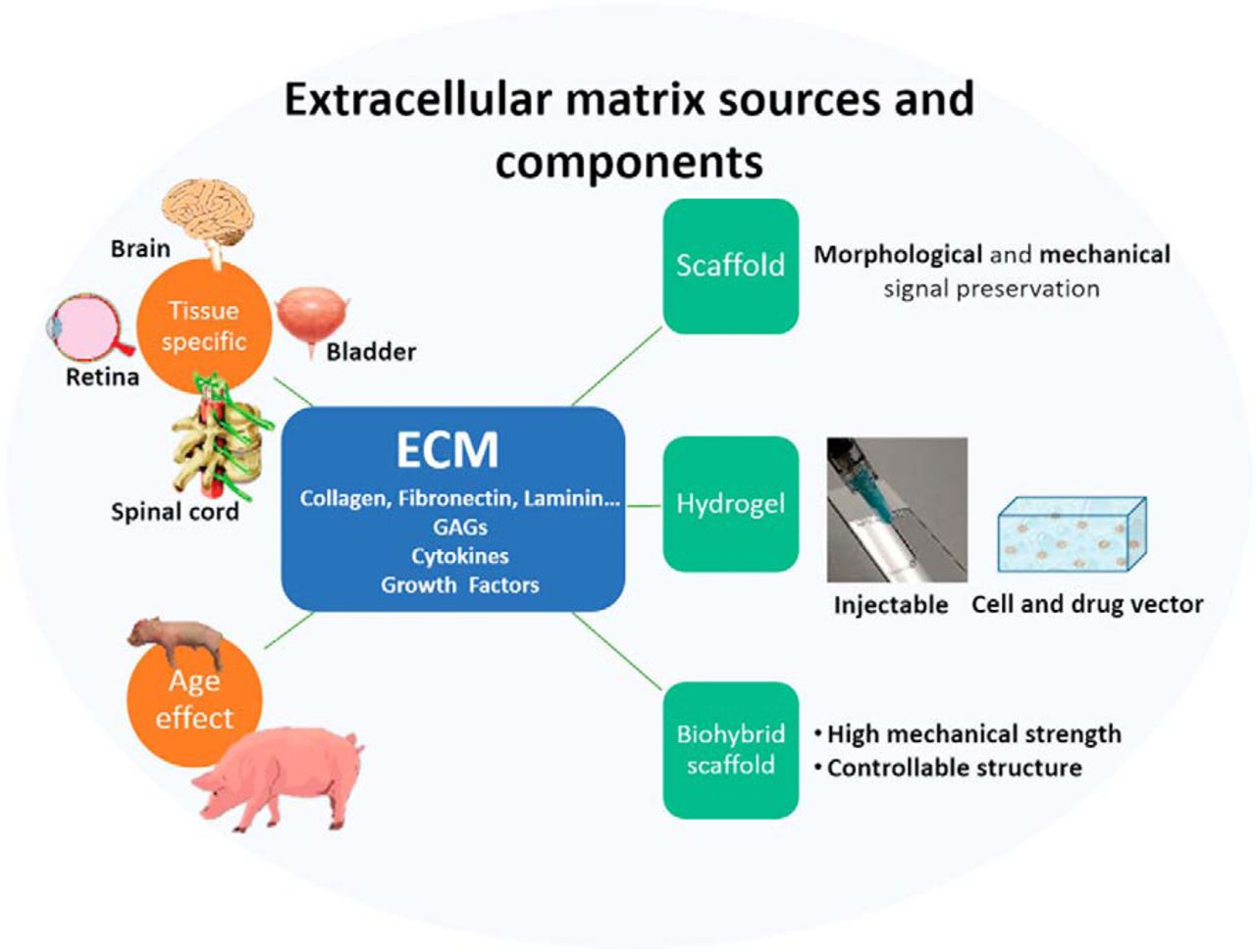 developing extracellular matrix technology to treat