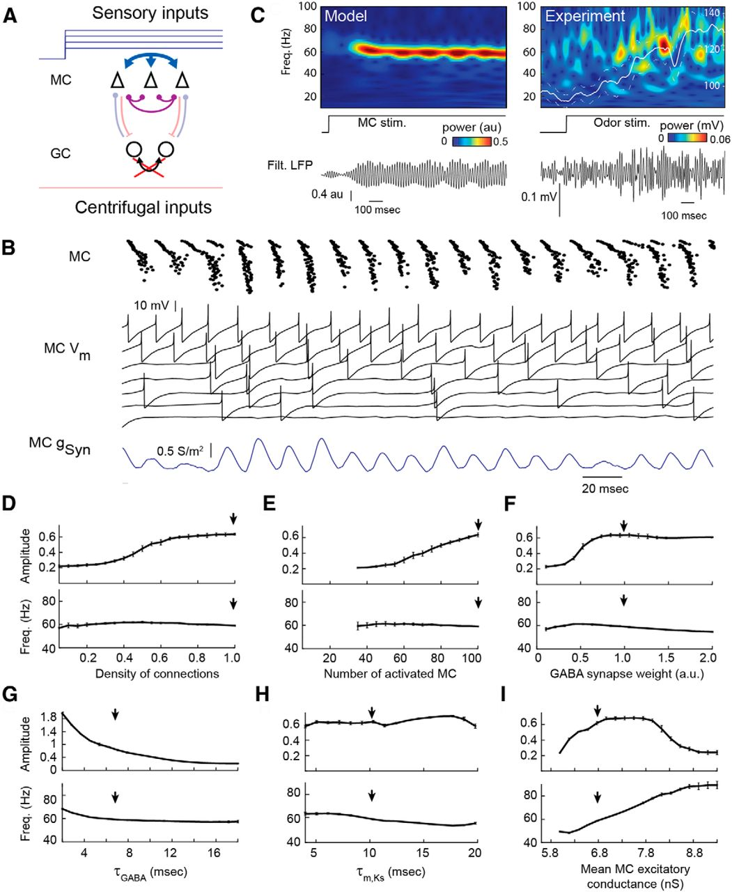 Competing Mechanisms Of Gamma And Beta Oscillations In The Olfactory Wiring Diagram Besides Cat 5 Cable On Goodman Download Figure