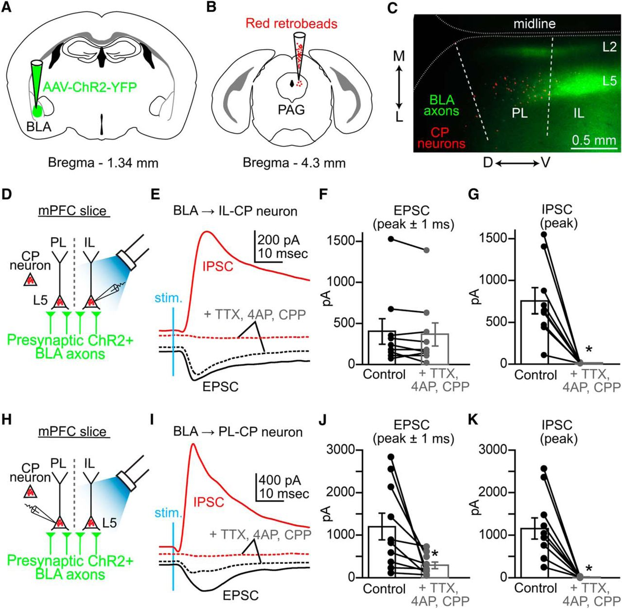 Specific Targeting Of The Basolateral Amygdala To Projectionally 292 Y Block Wiring Diagram Download Figure