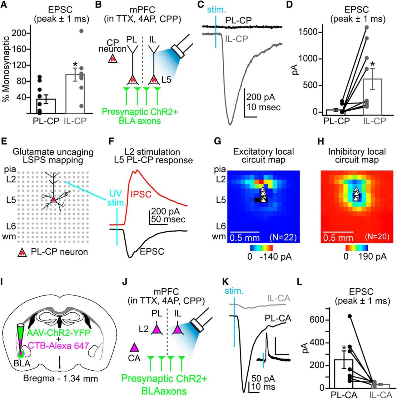 Specific targeting of the basolateral amygdala to projectionally download figure ccuart Image collections