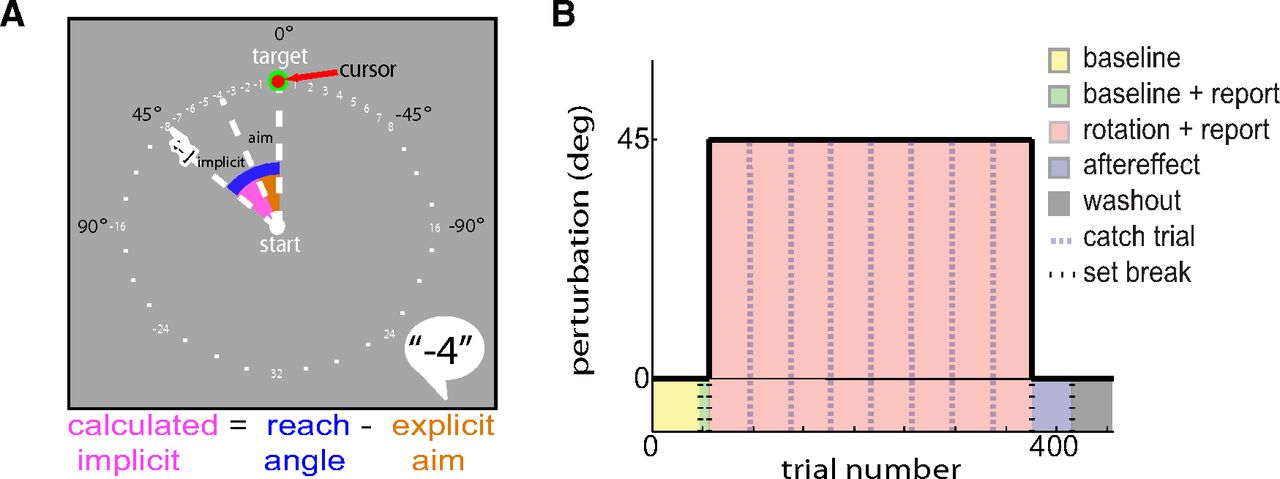 Visuomotor Learning Generalizes Around the Intended Movement | eNeuro