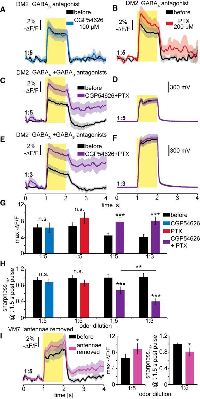 Presynaptic Gaba Receptors Mediate Temporal Contrast Enhancement In Negatives O No Darkroom Hassle Circuit Boards Quotondemand Download Figure