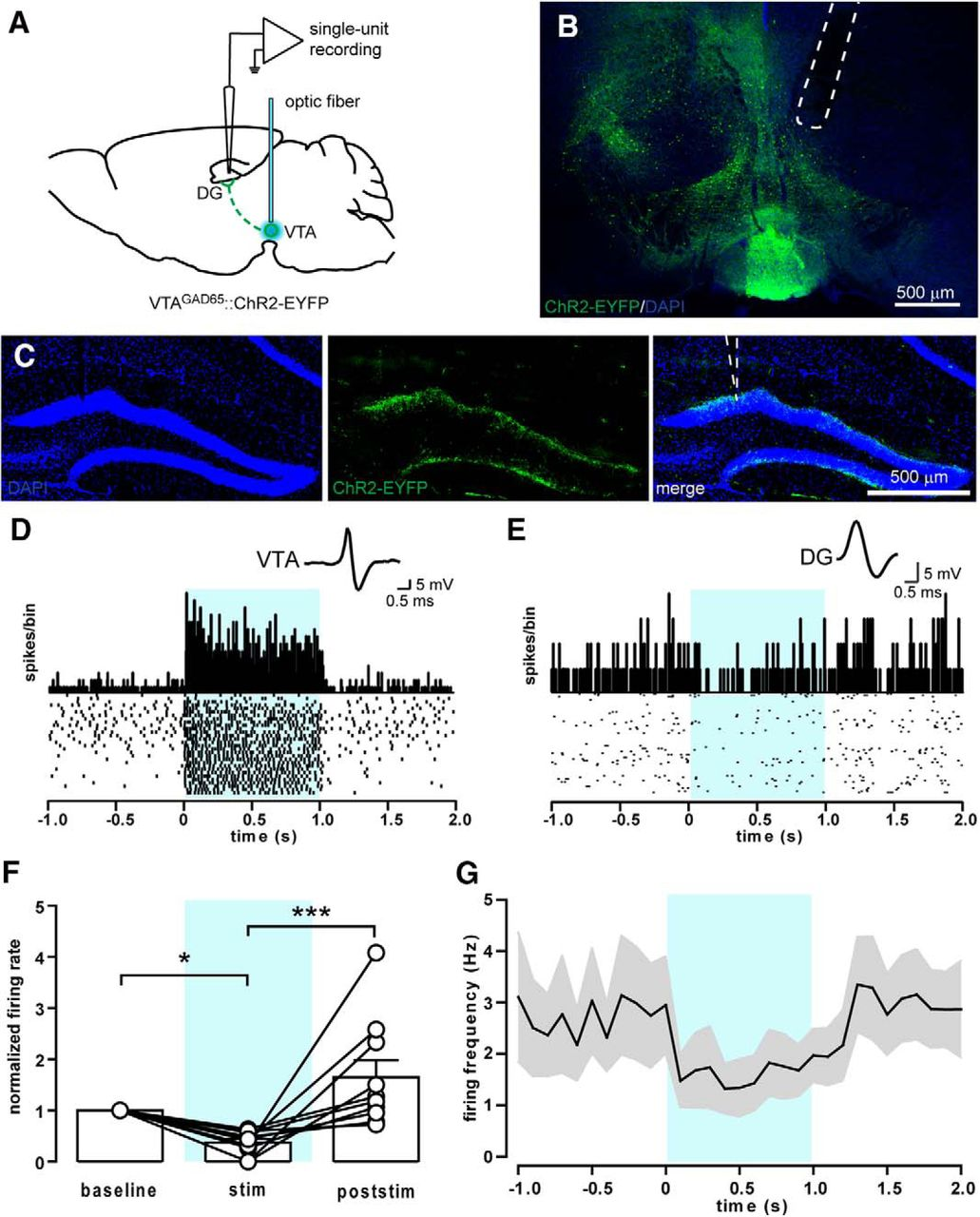 vta projection neurons releasing gaba and glutamate in the