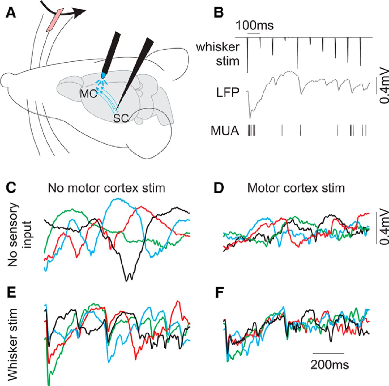 Simulating Cortical Feedback Modulation As Changes In Excitation And