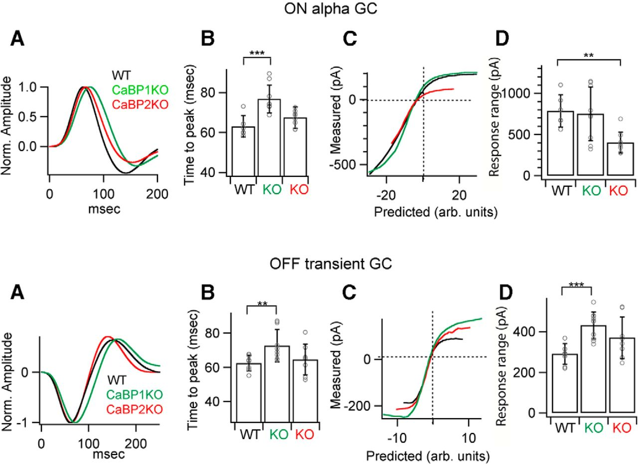 Lack of CaBP1/Caldendrin or CaBP2 Leads to Altered Ganglion Cell