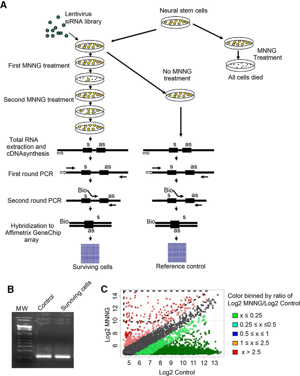 High Content Genome Wide Rnai Screen Reveals Ccr3 As A Key Mediator Hopkins 6 24 Wiring Diagram Download Figure