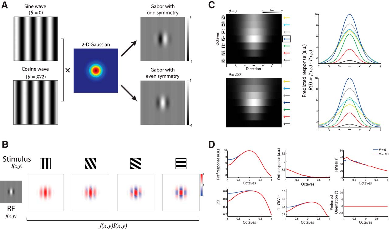 Orientation Tuning Depends On Spatial Frequency In Mouse Visual Sine Wave Diagram 2 Download Figure