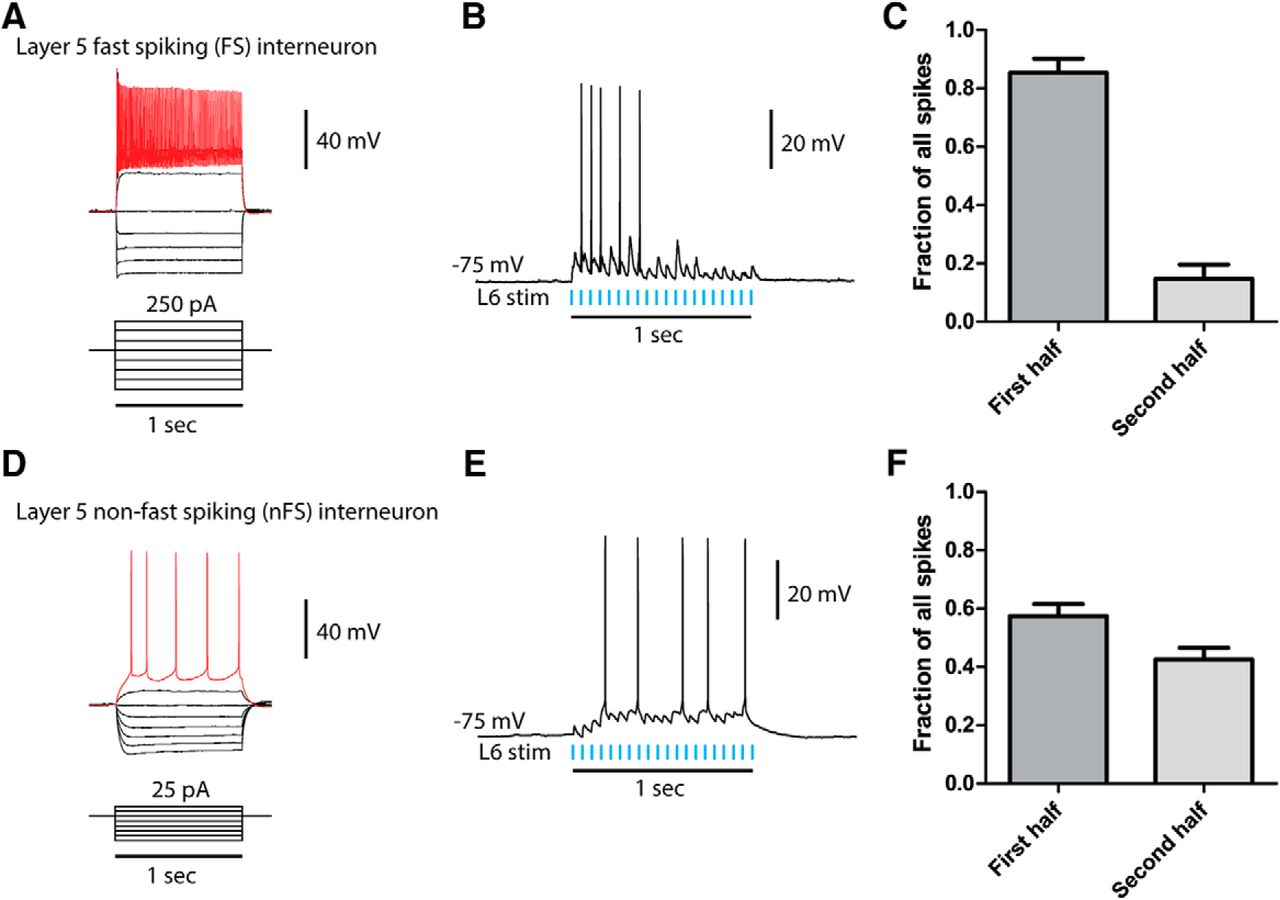 Serotonergic Suppression Of Mouse Prefrontal Circuits Implicated In Circuit Positive And Negative Half Cycles Halfcycle Download Figure