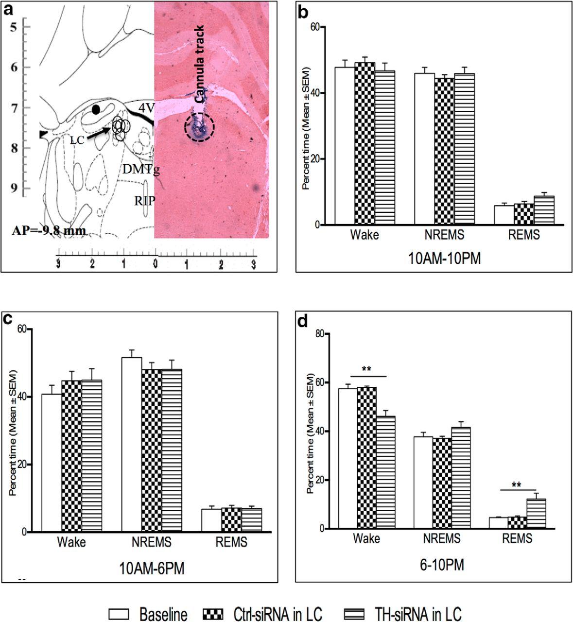 Noradrenaline from Locus Coeruleus Neurons Acts on Pedunculo-Pontine