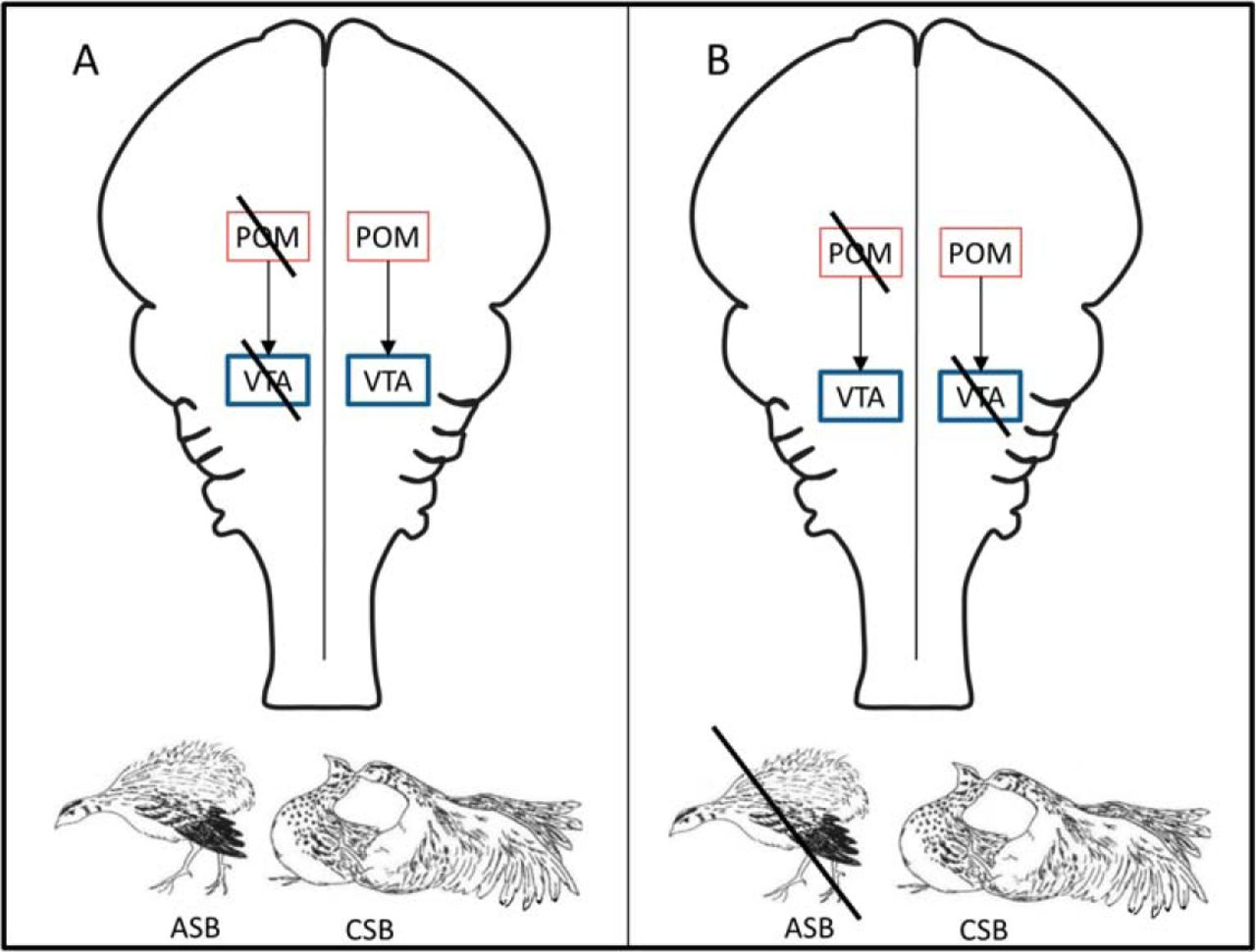 Medial Preoptic Regulation of the Ventral Tegmental Area Related to ...