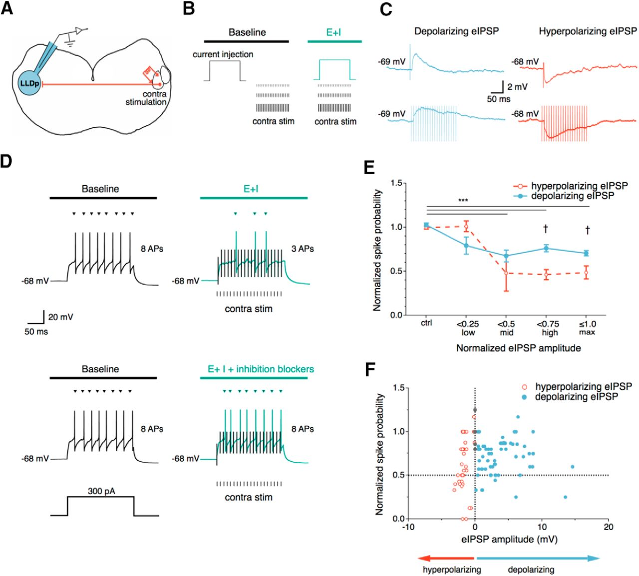 Synaptic Inhibition In Avian Interaural Level Difference Sound Cascaded Form C Dry Contact Wiring Schematic Download Figure