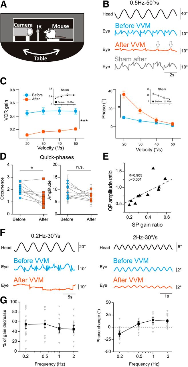 Long-Lasting Visuo-Vestibular Mismatch in Freely-Behaving Mice