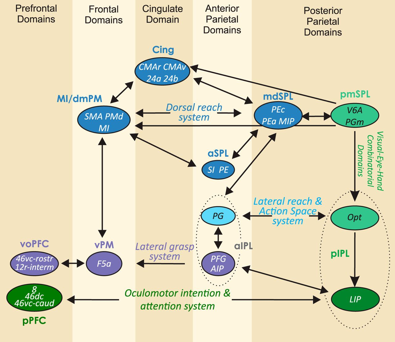 Computational Architecture Of The Parieto Frontal Network Underlying 360 Degree Feedback Report Spider Diagram Download Figure