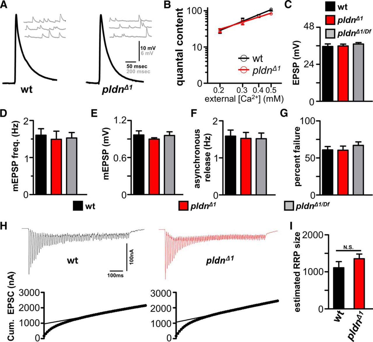 The BLOC-1 Subunit Pallidin Facilitates Activity-Dependent Synaptic