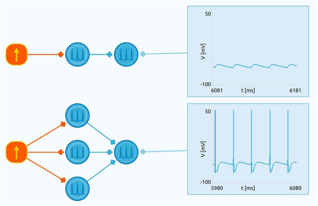 Neuronify An Educational Simulator For Neural Circuits Eneuro Ref Relay Circuit Diagram Download Figure