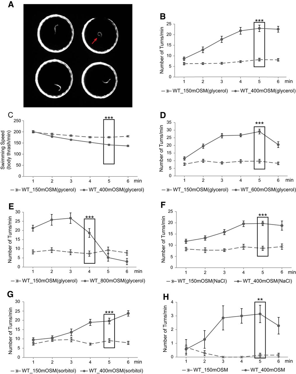 An Aversive Response to Osmotic Upshift in Caenorhabditis