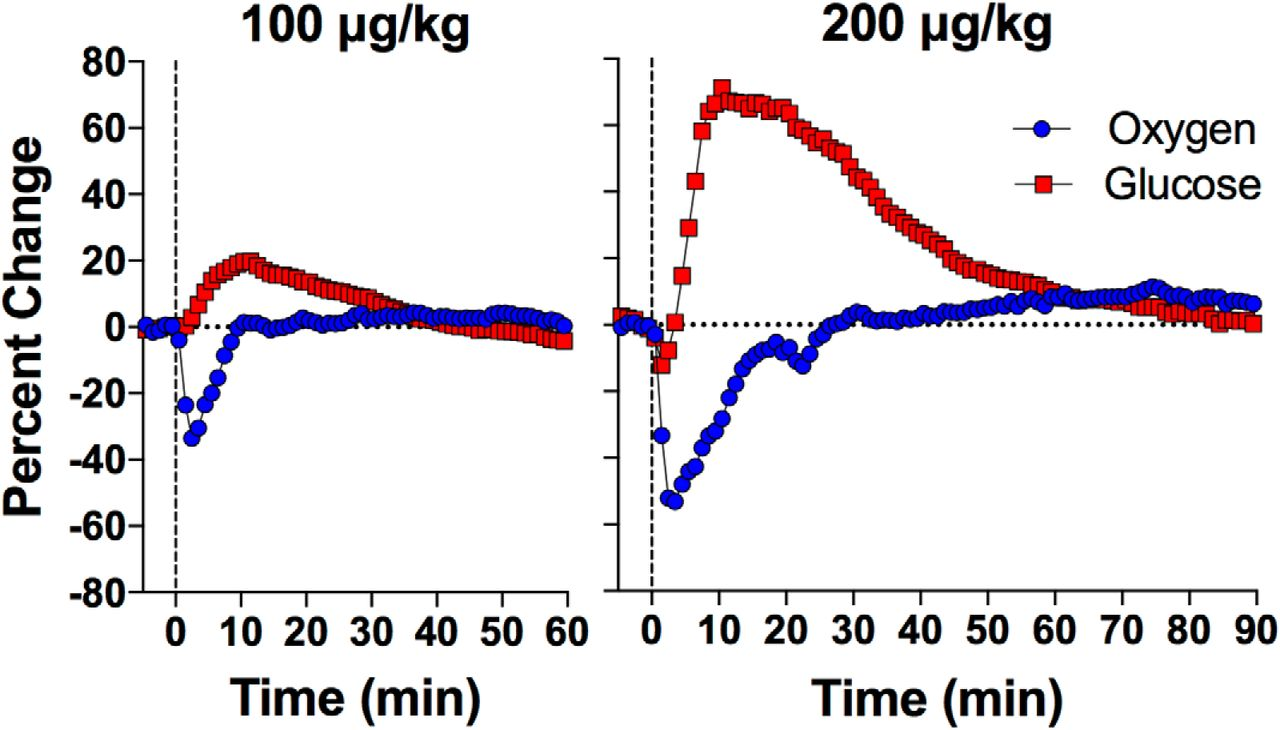 intravenous heroin induces rapid brain hypoxia and hyperglycemia rh eneuro org
