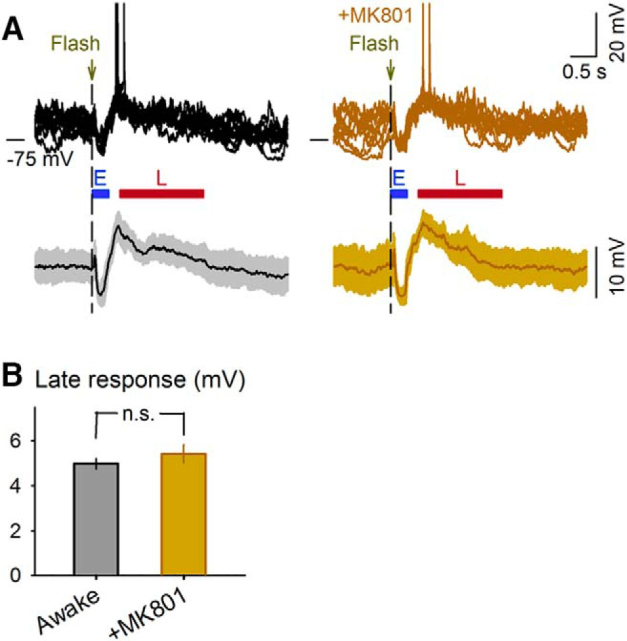 Flashing Lights Induce Prolonged Distortions In Visual Cortical This Flash Circuit Is A Typical Camera Download Figure