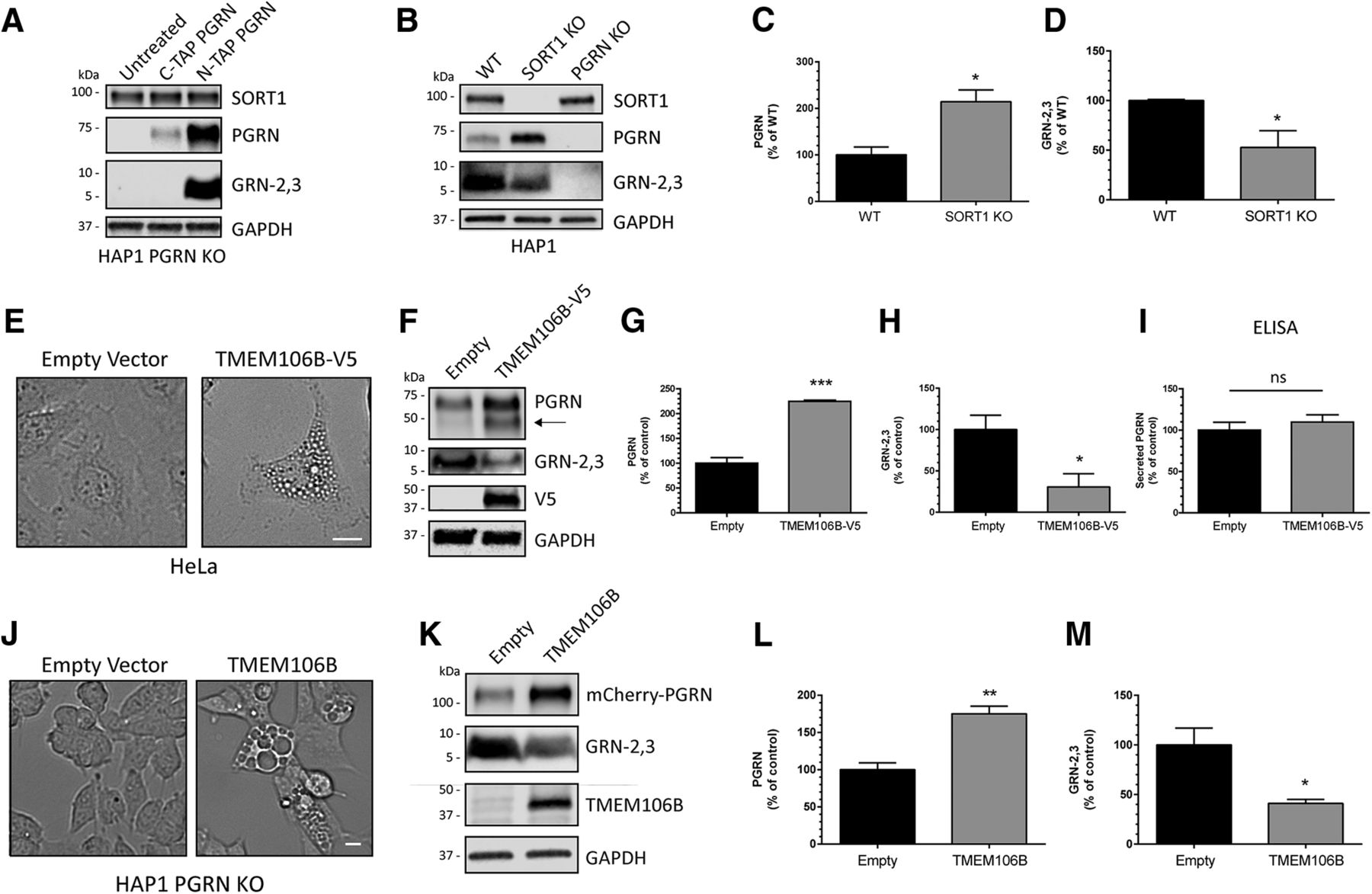 Intracellular Proteolysis of Progranulin Generates Stable