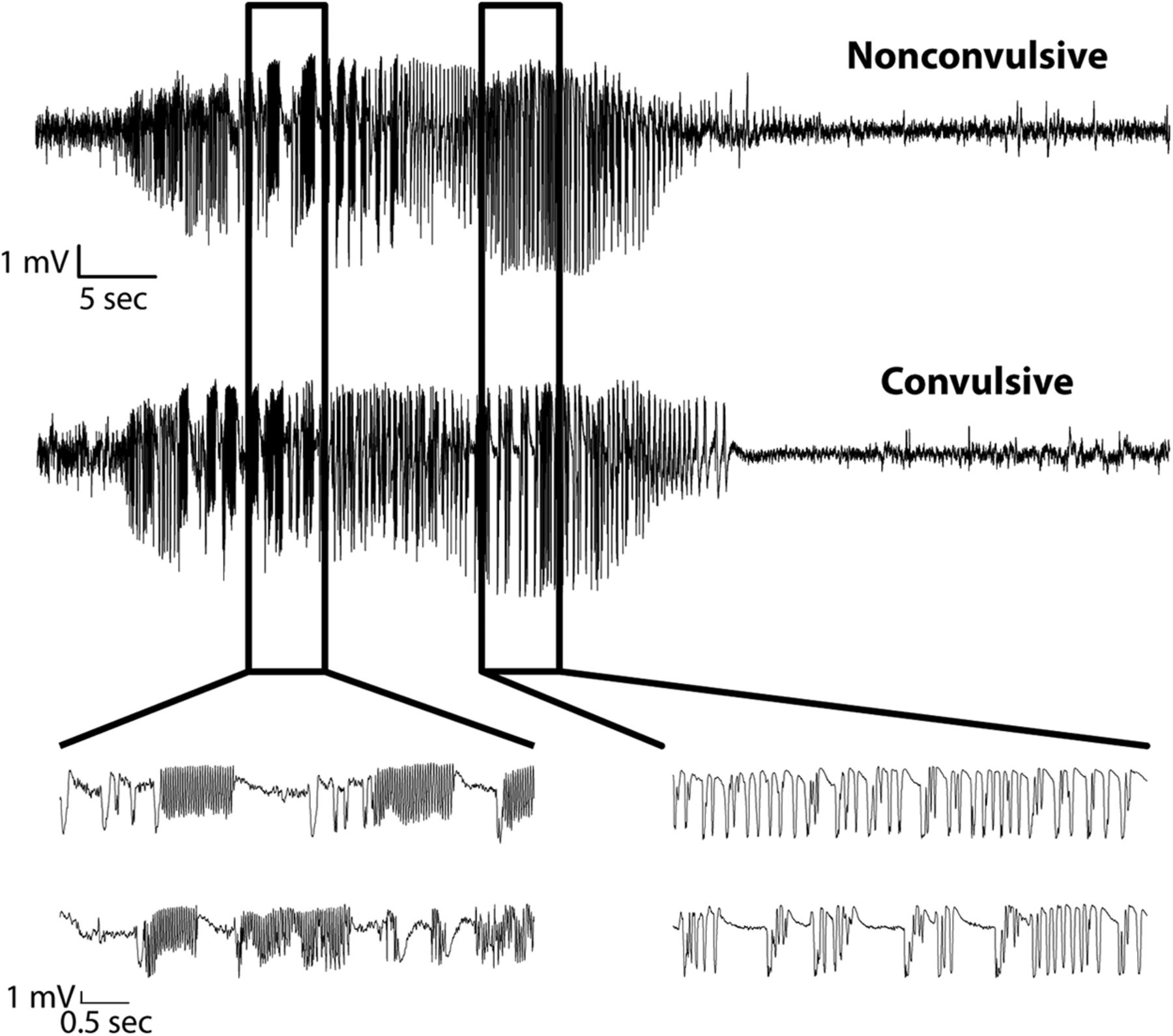 Targeted Interneuron Ablation in the Mouse Hippocampus Can
