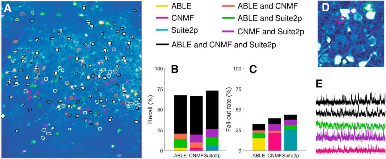 ABLE: An Activity-Based Level Set Segmentation Algorithm for