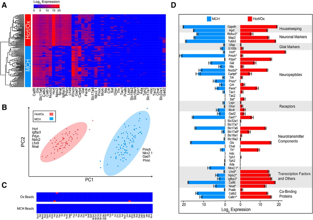 Neurochemical Heterogeneity Among Lateral Hypothalamic Hypocretin Weston Ct Wiring Diagram Download Figure