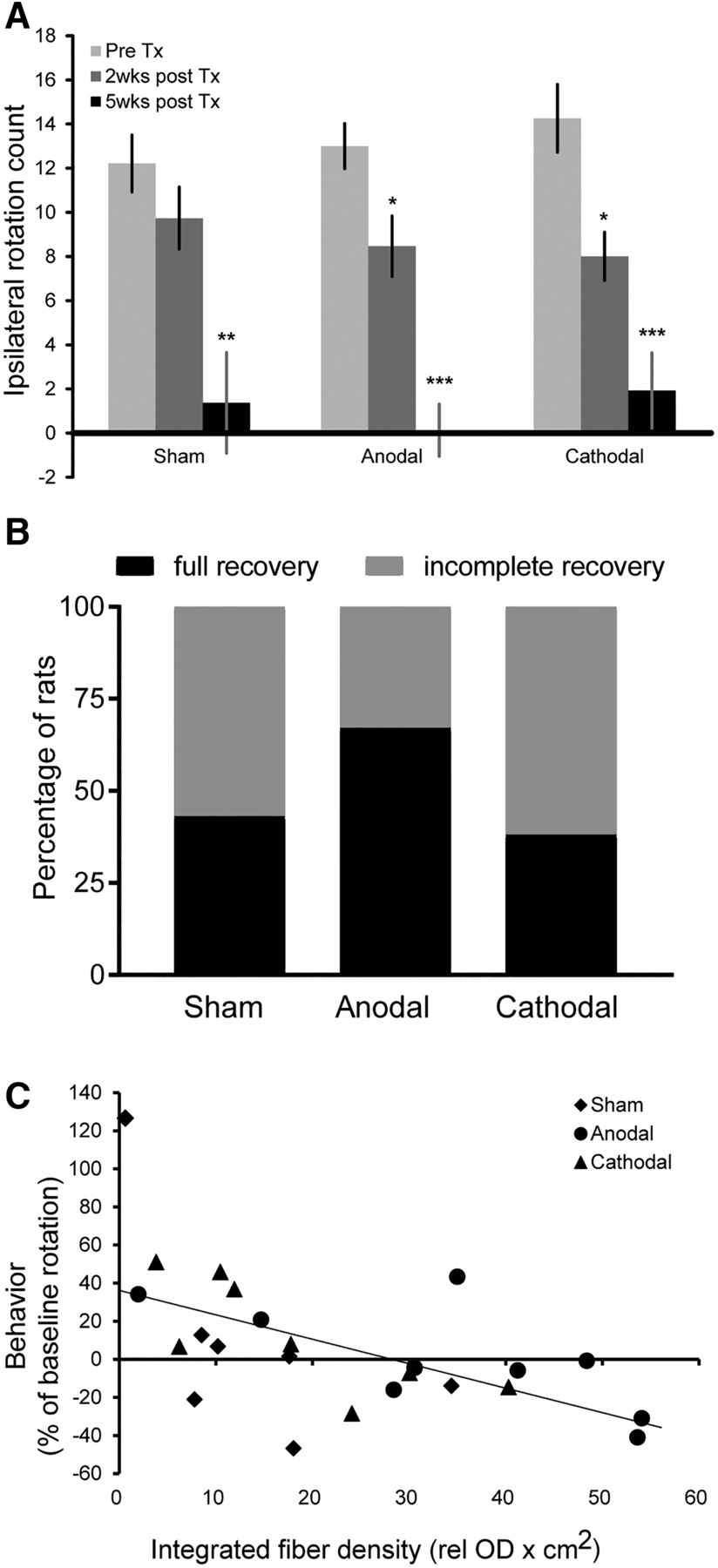 Anodal Transcranial Direct Current Stimulation Enhances