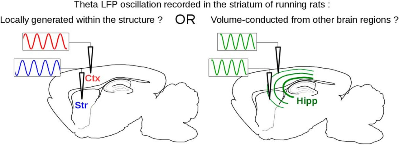 Local or Not Local: Investigating the Nature of Striatal