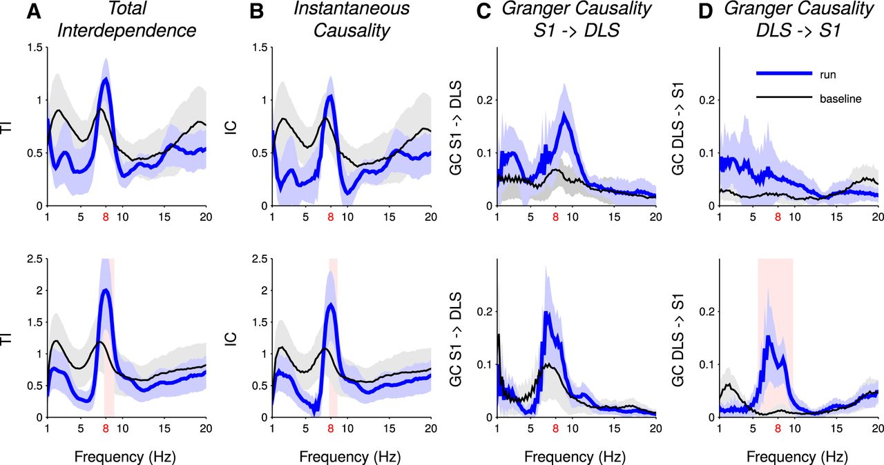 Local or Not Local: Investigating the Nature of Striatal Theta