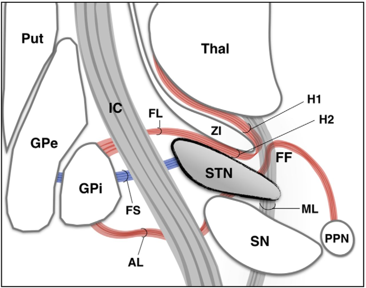 Subthalamic Nucleus Deep Brain Stimulation: Basic Concepts and Novel ...