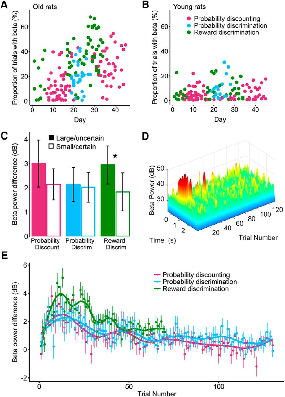 Emergence Of Band Oscillations In The Aged Rat Amygdala During Categorybandreject Filter Circuits Wikimedia Commons Download Figure