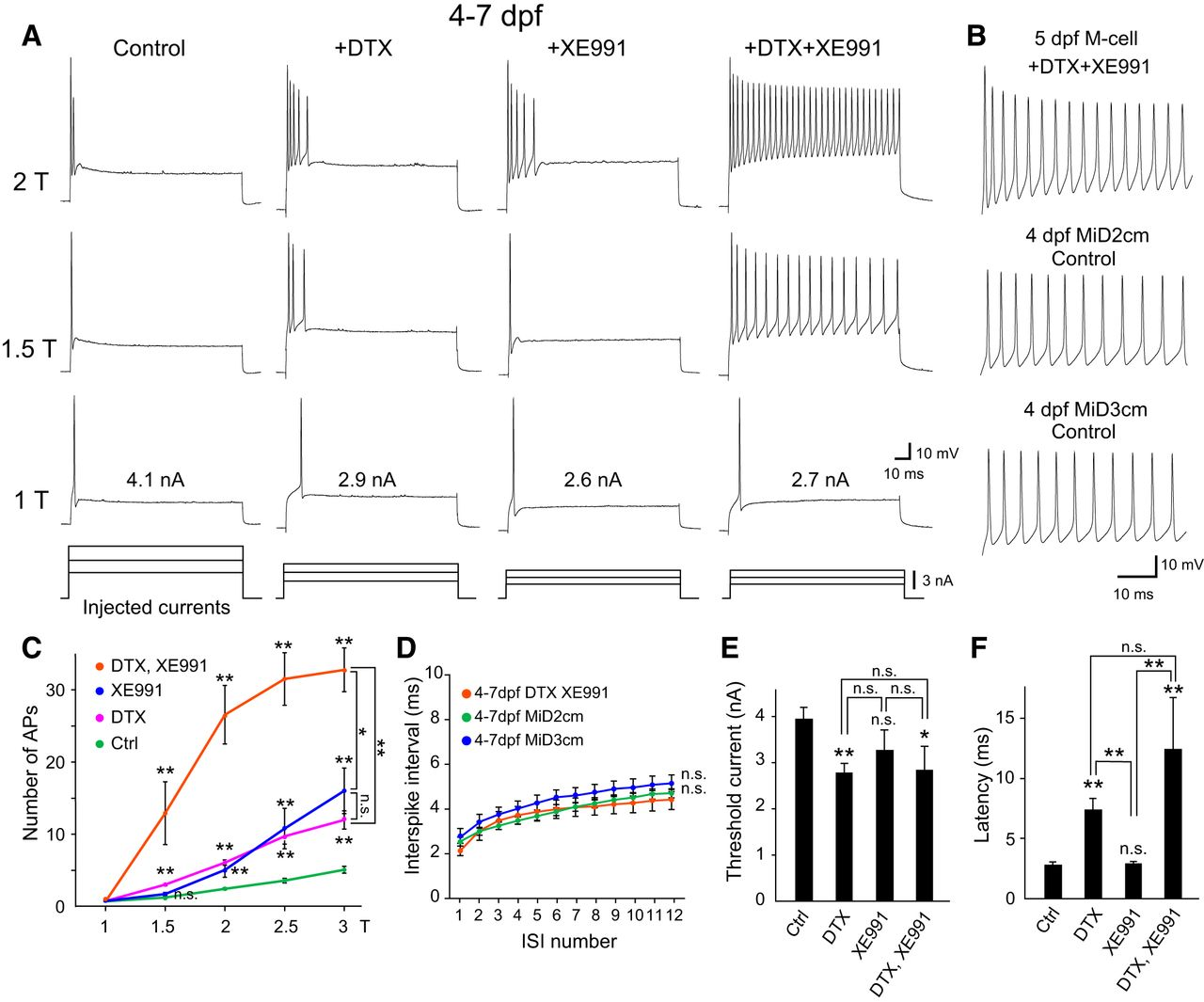 Coordinated Expression of Two Types of Low-Threshold K+