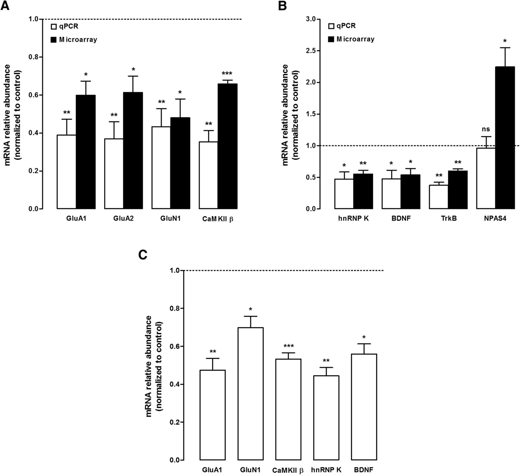 The RNA-Binding Protein hnRNP K Mediates the Effect of BDNF