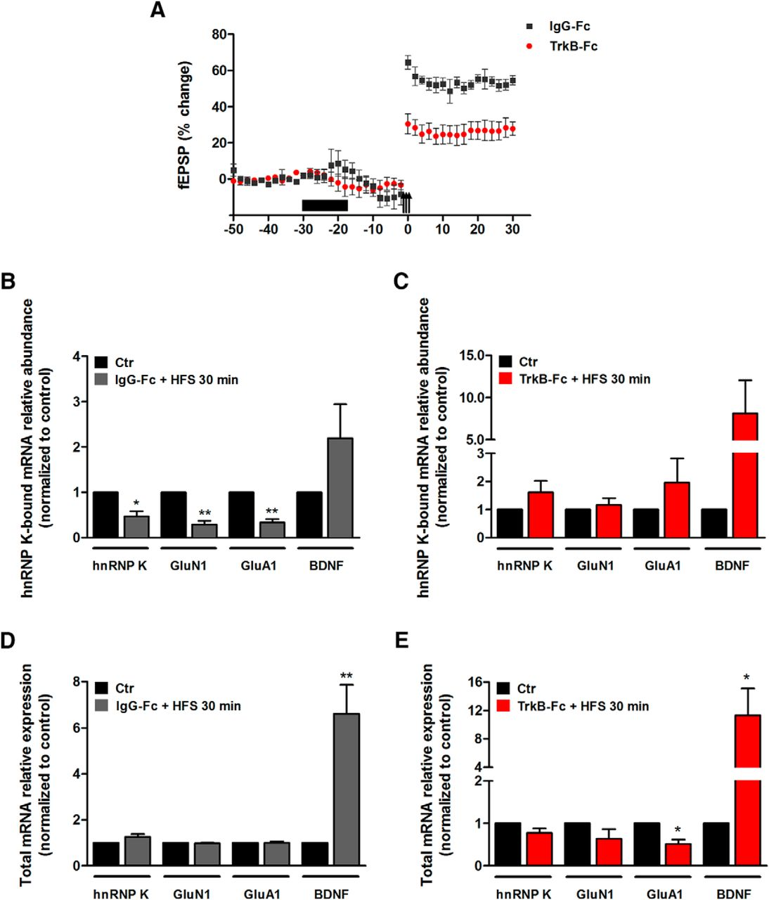 The RNA-Binding Protein hnRNP K Mediates the Effect of