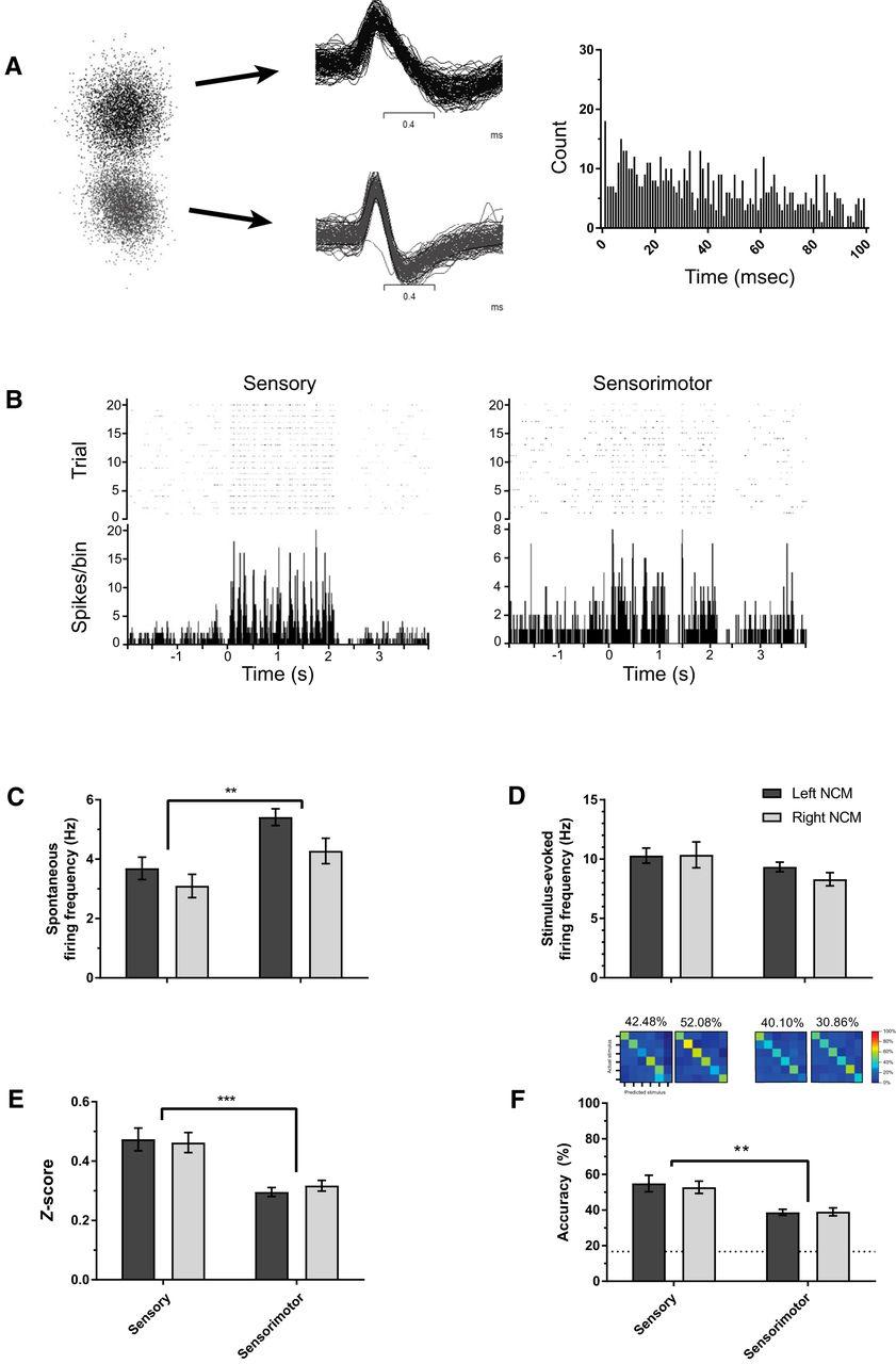 Sensory Coding and Sensitivity to Local Estrogens Shift