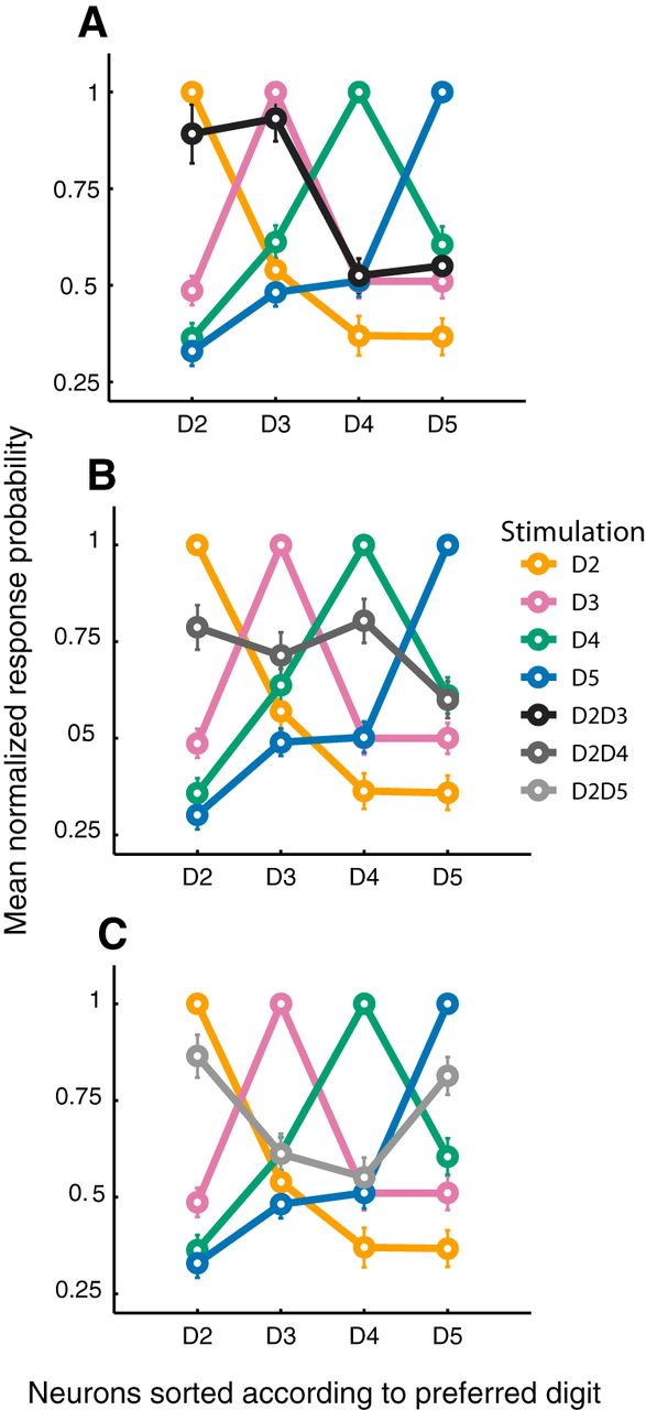 Cortical Merging in S1 as a Substrate for Tactile Input