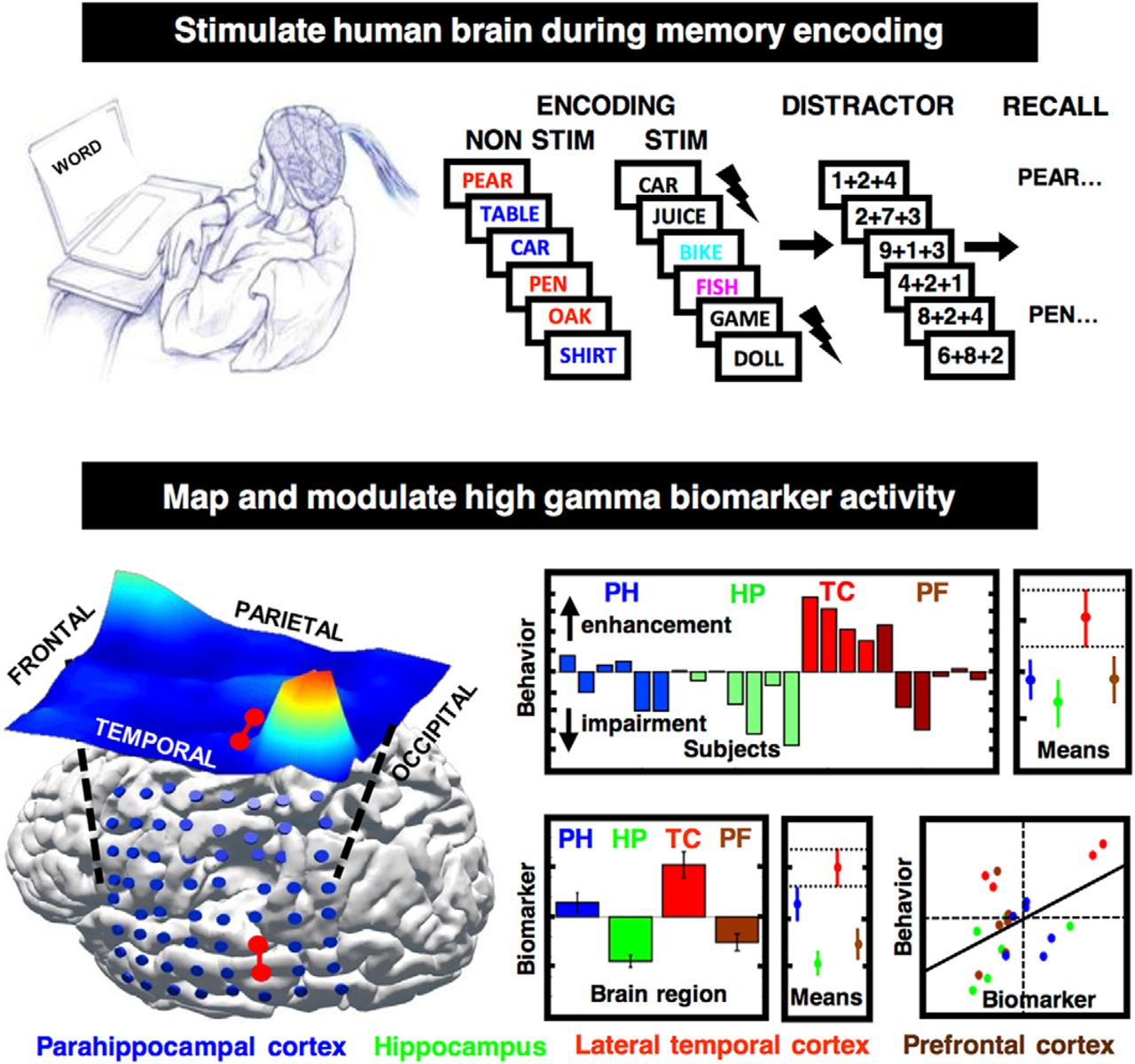 Electrical Stimulation Modulates High γ Activity and Human