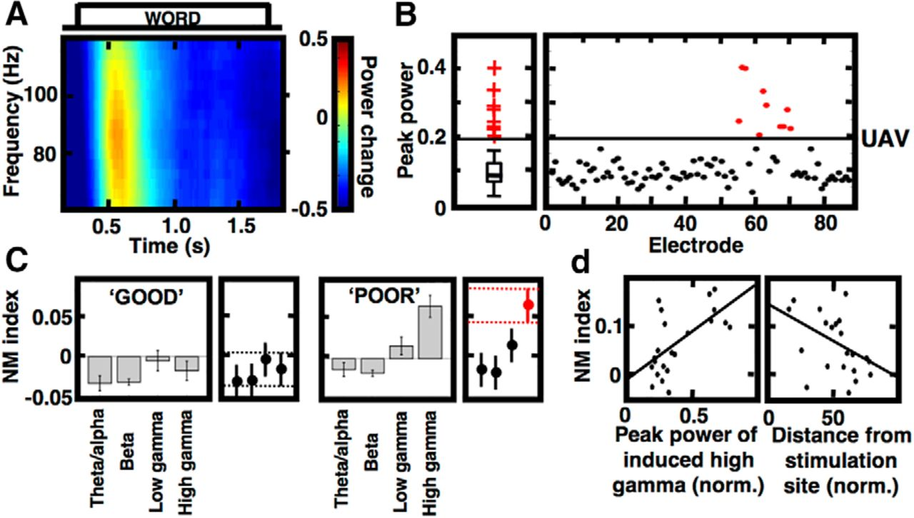 Electrical Stimulation Modulates High γ Activity and Human