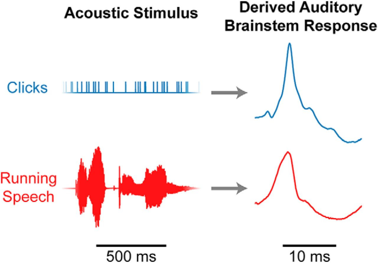 Auditory Brainstem Responses to Continuous Natural Speech in