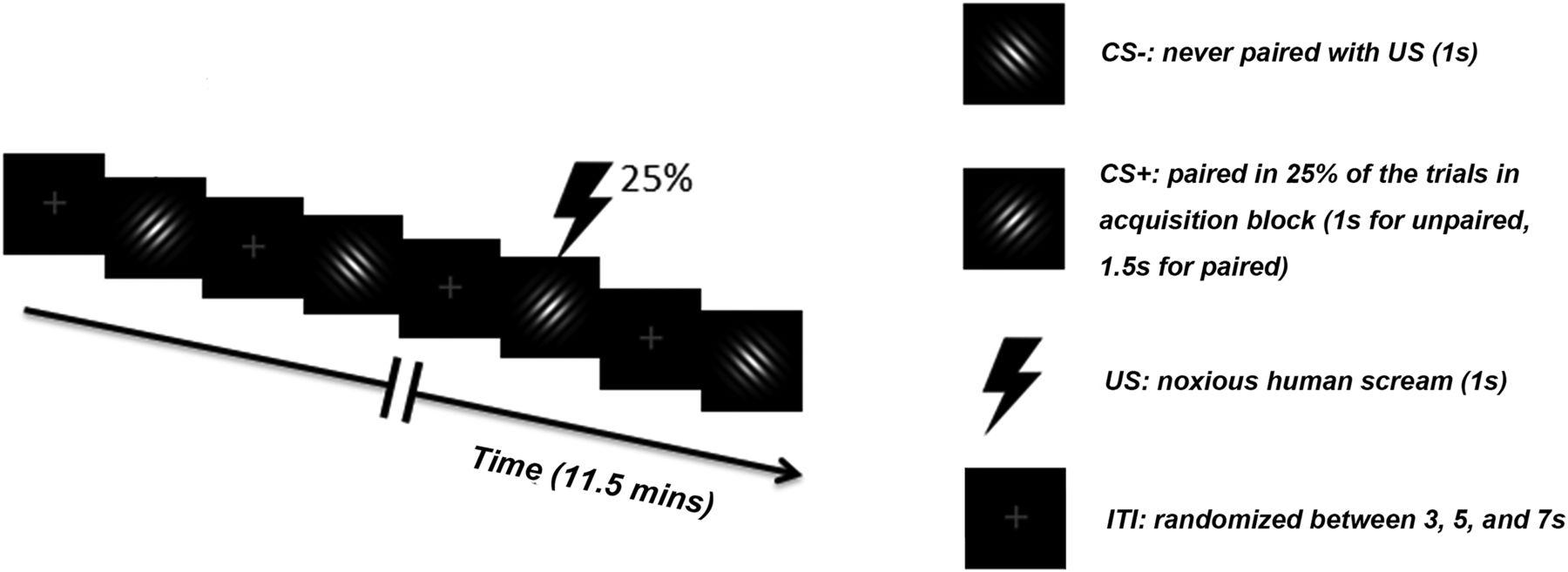 Amygdala Adaptation and Temporal Dynamics of the Salience