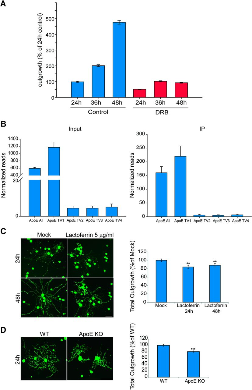 Studies Implicate Early Injury To >> Translatome Regulation In Neuronal Injury And Axon Regrowth Eneuro