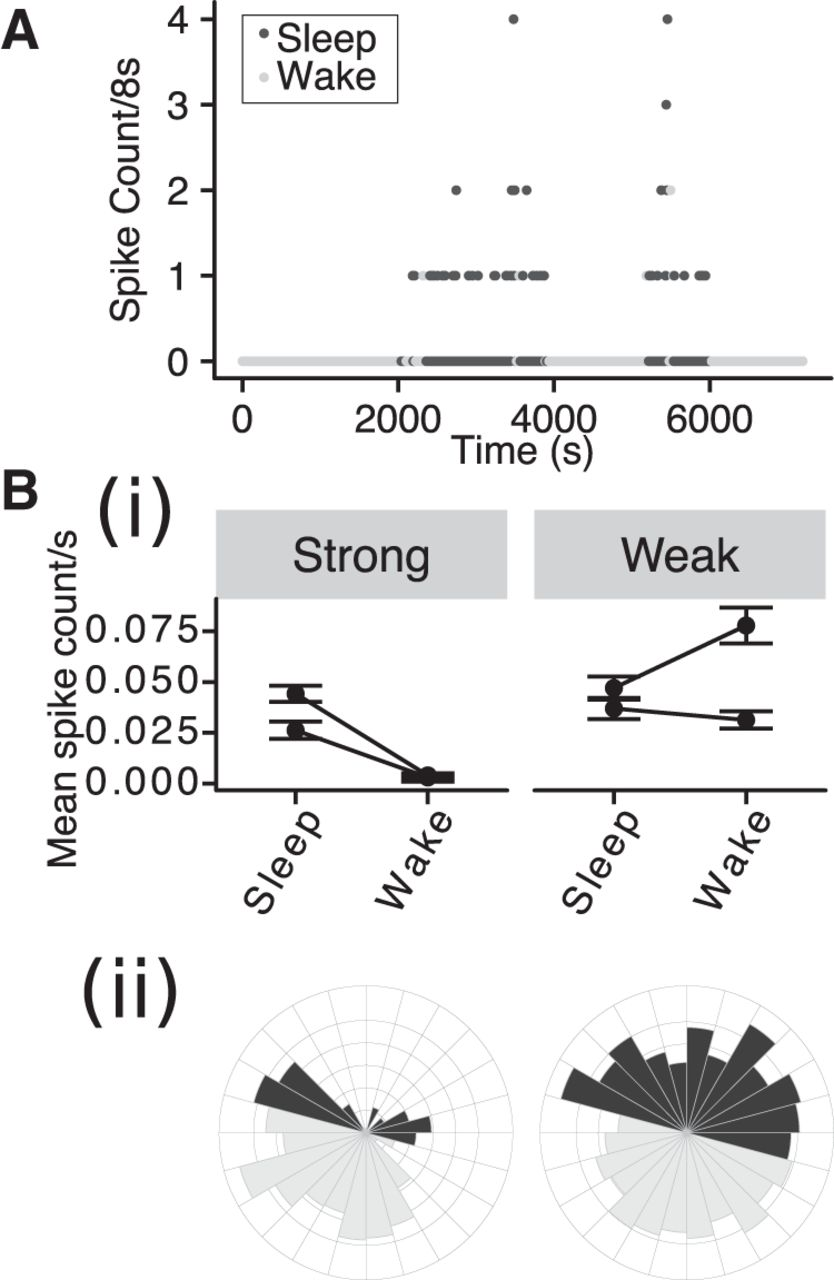 Circadian and Brain State Modulation of Network