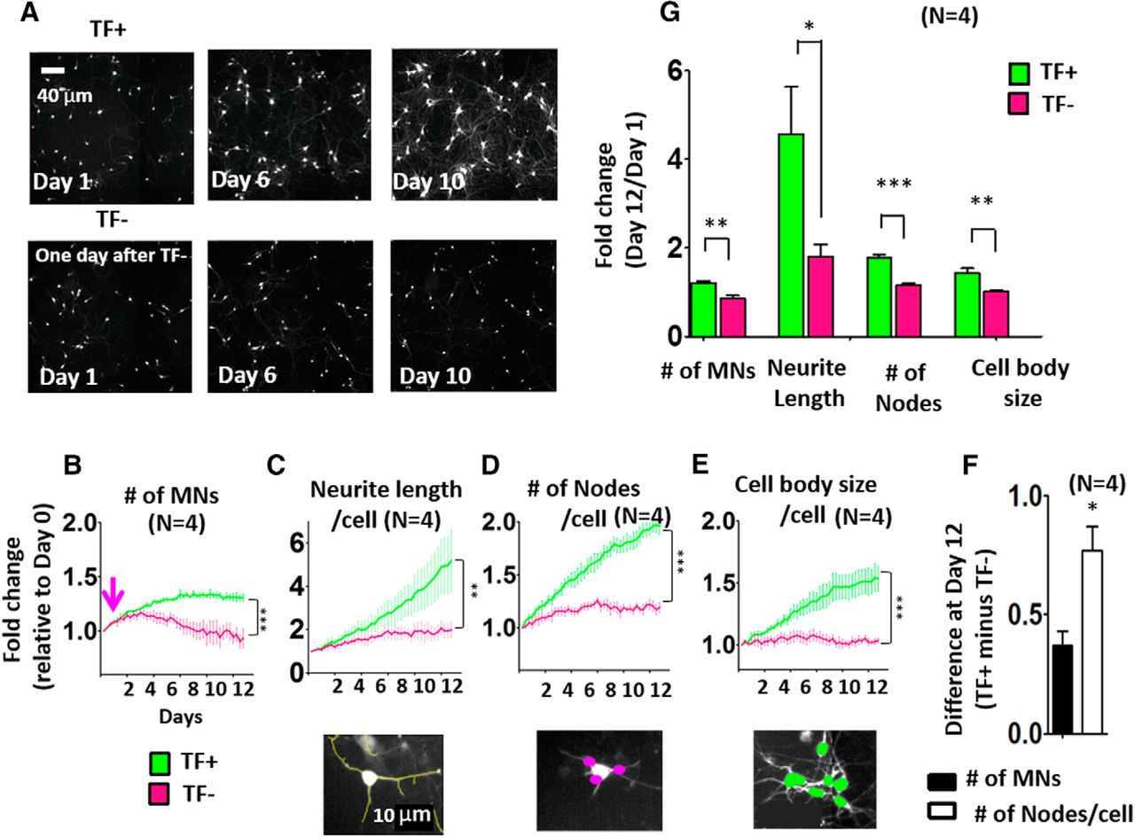 Using Automated Live Cell Imaging to Reveal Early Changes