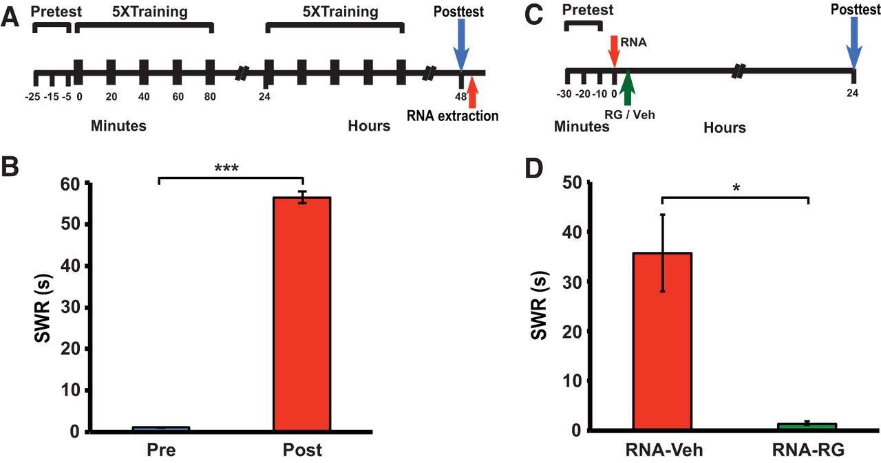 Rna From Trained Aplysia Can Induce An Epigenetic Engram For Long 656 International Wiring Diagram Download Figure